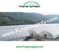 Single Span greenhouse for vegetable fruits , Agricultural Greenhouses