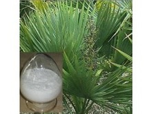 100% natural saw palmetto extract 25% / fatty acid