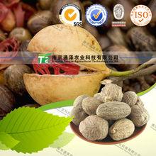 Raw material herbal medicine Nutmeg
