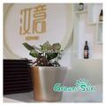 Bacia de plástico carnudas planta cactus panelas pretas-1009
