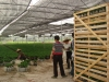 Delong Farm / ginseng ficus