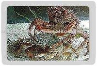 Mediterranean spiny spider crab