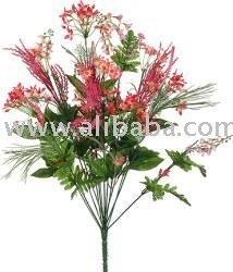 Wildflowers Found in Oregon - Willamette Daisy