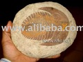 """ andalousiana"" fósiles trilobites"