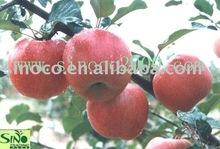 red star apple
