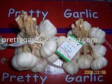 China Garlic Bundle