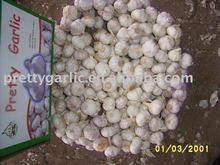 Fresh Jinxiang Garlic