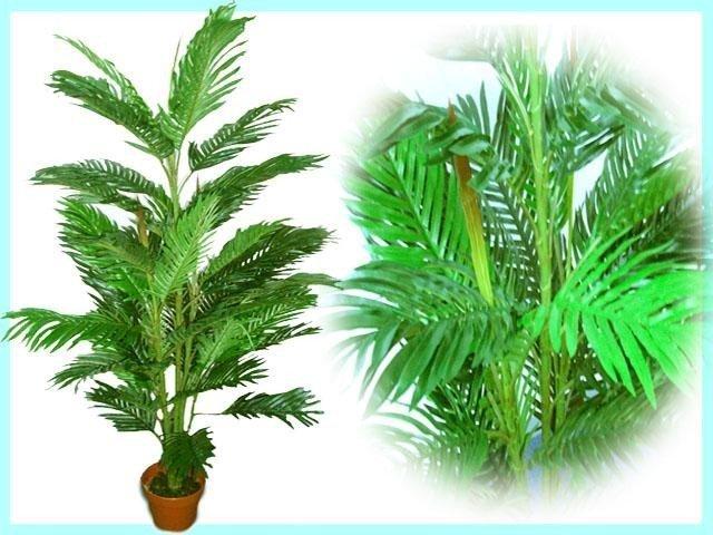 plants and tree 4 5ft phoenix palm tree malaysia