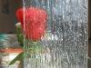 flora/undersea Paradise figured glass
