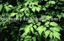 Black Cohosh Extract Powder / Triterpene Glycosides 2.5%