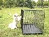 dog products(pet cage dog)