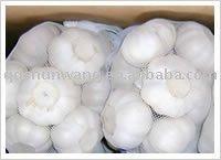 fresh garlic 2012