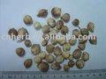 Amomum blanc/épice blanche d'amomum