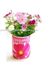 Tin Can Flower,Tin Flower,Garden Plant