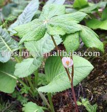 Podofilina ( extrato da planta )