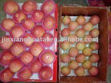 chinese fresh fuji apple