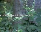 Black Cohosh P.E. Cimicifuga Romose L.