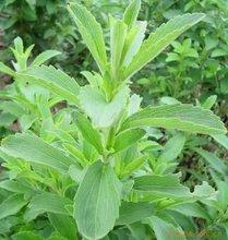 Stevia, Stevia extract, Rebaudioside A 40%-97%