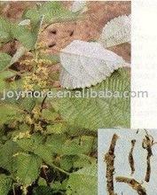 Ramie Leaf Extract Boehmeria Nipononivea