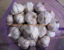 Fresh Regular White Garlic in mesh bag