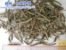 8-5 Herba Schizonepetae detoxifying drug