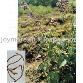 Black Cohosh P.E. Triterpenoid Saponins 5%
