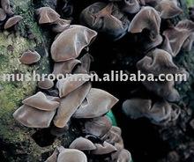 Auricularia auricular polysaccharide