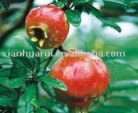 Pomegranate extract/Ellagic acid 40%/Punica granatum extract