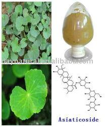 Natural Gotu Kola P.E. --Total Triterpenes(HPLC 70% -95%)