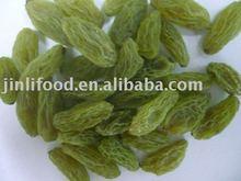 new crop green raisin