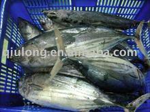new skipjack tuna