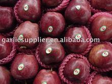 Perfect huaniu apple crop 2010
