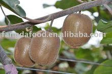 Chinese New Kiwi Fruits