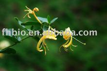 Honey Suckle Flower Extract(25% 50%,60%,70% ,90%)