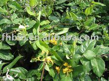 Honey Suckle Flower Pharmaceuticals(Chlorogenic acid)