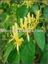 Honey Suckle Flower Powder HPLC