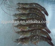 HOSO Frozen Shrimp (All Size, )