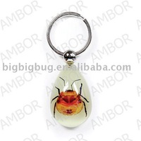 Real Insect Souvenir Keychain,Promotional Keyring