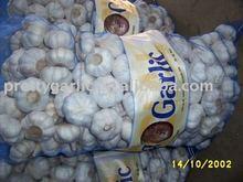 normal white fresh garlic in sacks