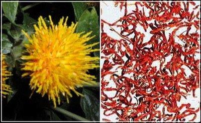 Avoid Junk Food Through Saffron Extract Dr Oz