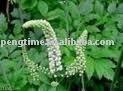Black Cohosh Extract Triterpene