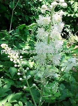 Black Cohosh Extract Triterpene glycosides2.5%