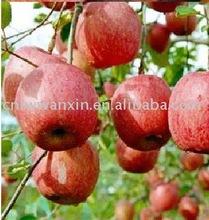 delicate Fuji Apple