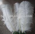 pluma de avestruz