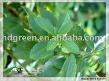 Stevia ( Stevioside )