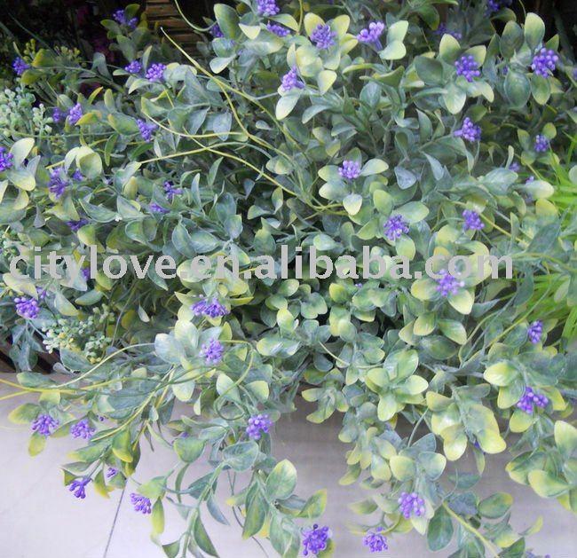 bush plant pictures. ush plant.