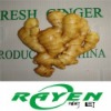 Semi Air Dried Ginger from China