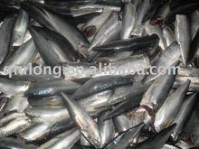 frozen fish ( mackerel hgt)