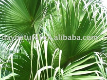 Total Fatty Acids--Saw Palmetto P.E.---CAS No. 84604-15-9