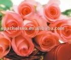 100% Pure Bulgaria Rose Essential Oil(special grade)